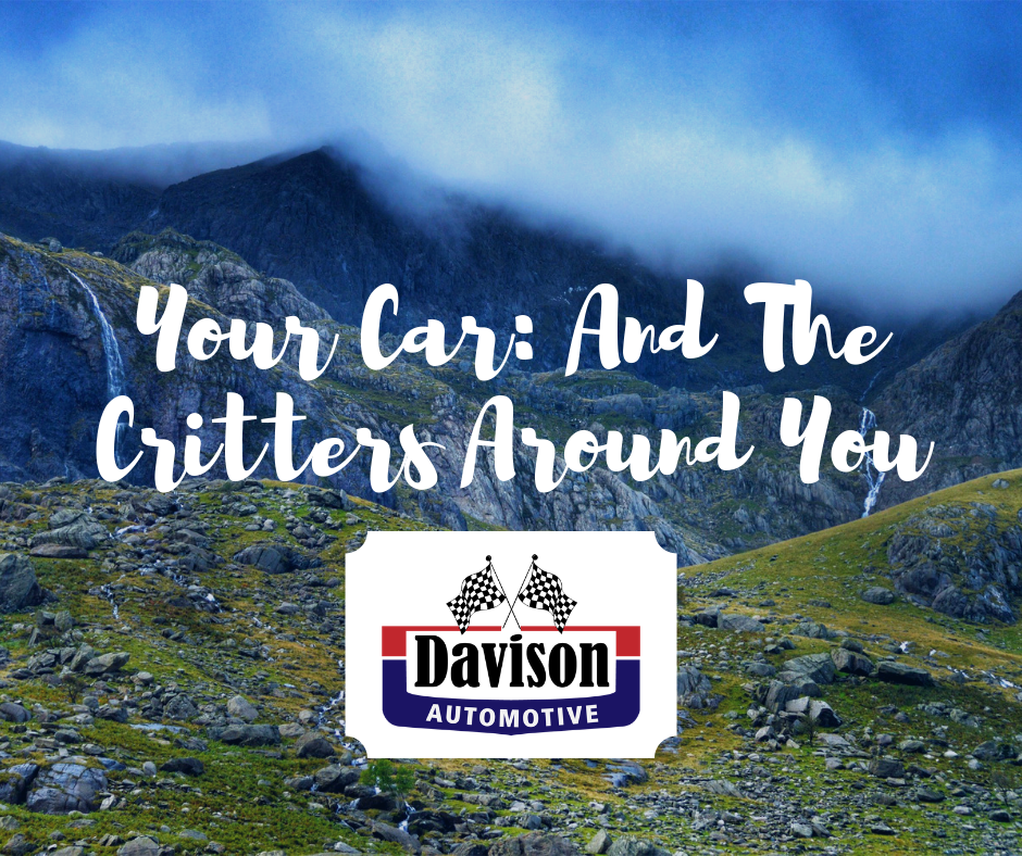​  Your Car And The Critters Around You: